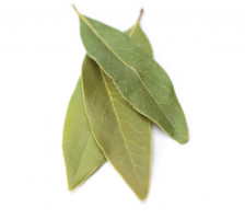 bay-laurel.jpg